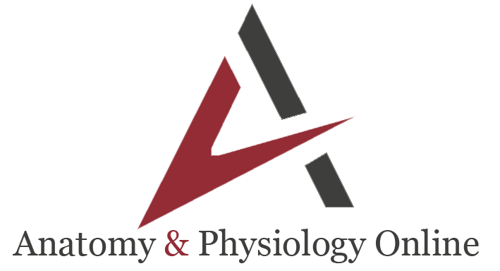 Anatomy & Physiology Online Courses