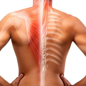 Soft Tissue Dysfunction and Injury Online Training Course, anatomh and physiology online courses